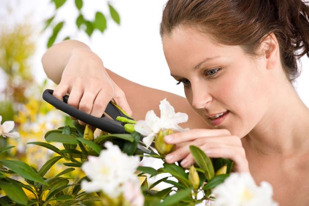 Cuando se podan las flores en jardiner a diario de for Cuando se podan los arboles frutales