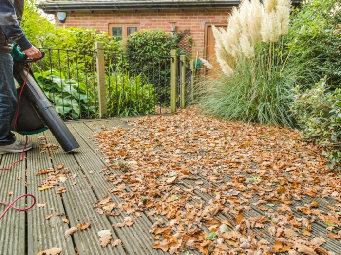 Como limpiar el jard n de hojas secas diario de palenque for Aspiradora de hojas para jardin